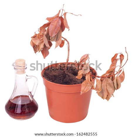 Simple dead plant in pot isolated on white background - stock photo