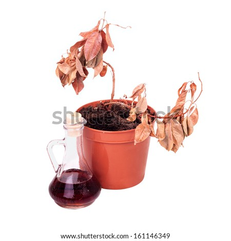Simple dead plants and dusty decanter isolated on white background