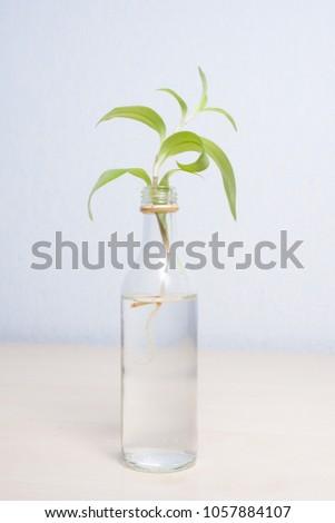 Simple Decoration Miniature Old Liquor Bottle Stock Photo Royalty