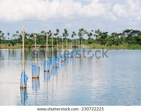 Simple devices for feeding Tilapia fish at fish farm at the Irrawaddy Delta in Myanmar - stock photo
