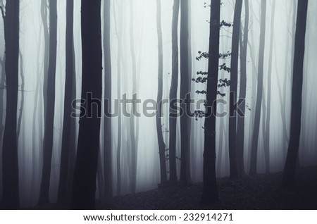 simple forest landscape - stock photo