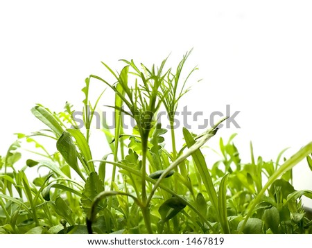 simple isolated grass