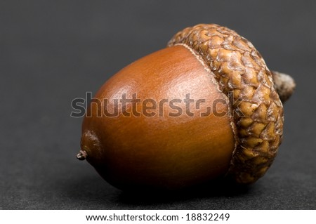 Simple macro picture of an acorn on a black background. - stock photo