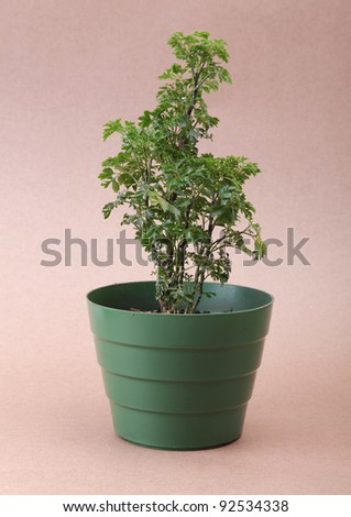simple plastic pot on cardboard background, green image - stock photo
