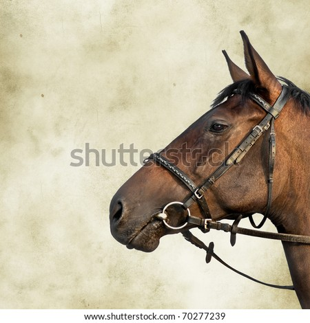 Simple portrait of a fine bay horse