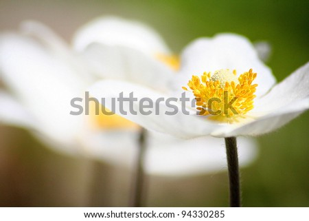Simple white flowers - stock photo