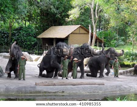 SINGAPORE ASIA - NOVEMBER 14: Elephants at Work and Play Show at Singapore Zoo November 14, 2014 in Singapore, Asia - stock photo