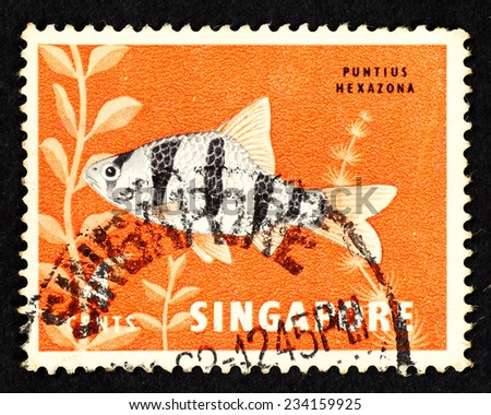 SINGAPORE - CIRCA 1962: Orange color postage stamp printed in Singapore with image of a Puntius Hexazona fish, also known as Six-banded Tiger Barb. - stock photo