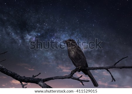 Singing bird against the starry sky with first rays of sunrise - stock photo
