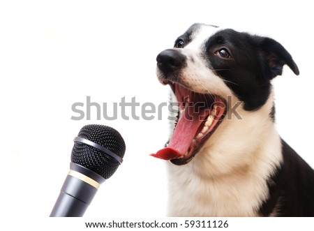 Singing dog - stock photo