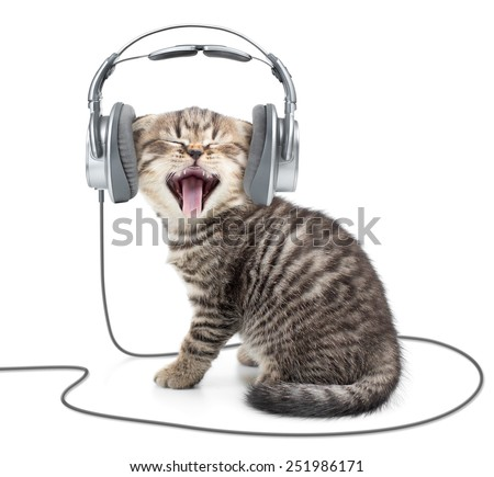 Singing kitten cat in wired headphones listening to music - stock photo