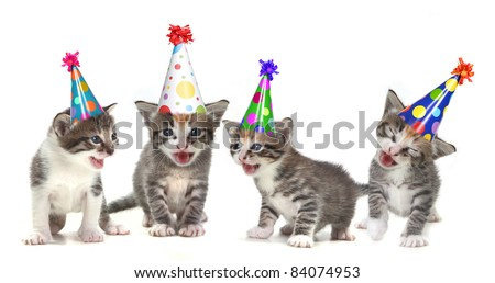 Singing Kittens on a White Background With Birthday Hats - stock photo