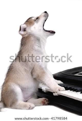Singing puppy - stock photo