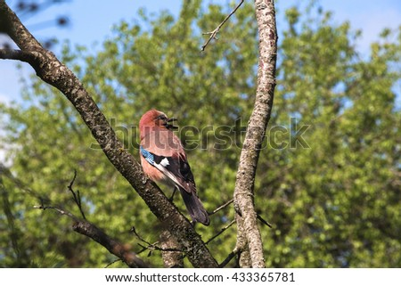 Singing spring bird on a dead tree in the garden - life goes on. - stock photo