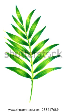 single beautiful palm leaf. - stock photo