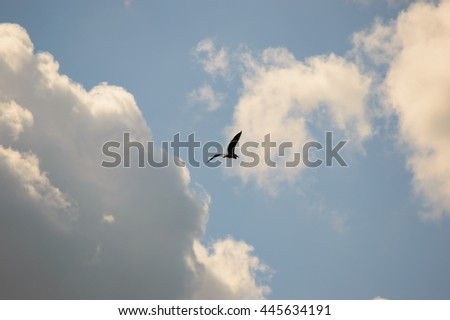Single bird flying high in the blue sky towards white cumulus clouds lit by the sun in a nature and weather background