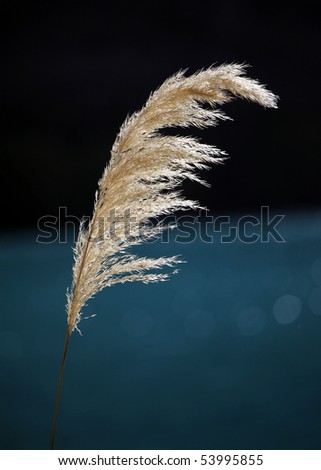single blade of grass against blue background - stock photo