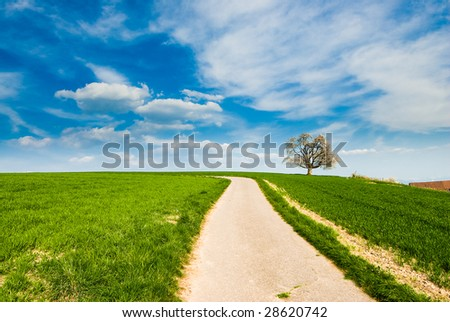 single blossoming cherry tree in spring on a green meadow with a small dirt road