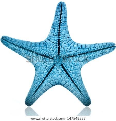 Single Blue starfish isolated on white background  - stock photo