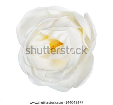 single brier flower isolated on white background