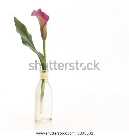 Single calla lily in small vase. - stock photo