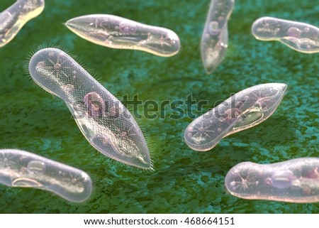 Single-celled organisms ciliates on a green background. 3d illustration.