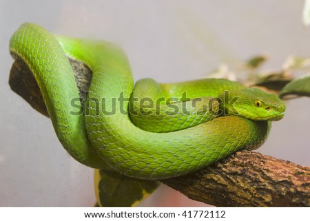 Single colorful scrunch green young snake