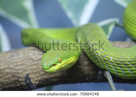 Single colorful scrunch green young snake - stock photo
