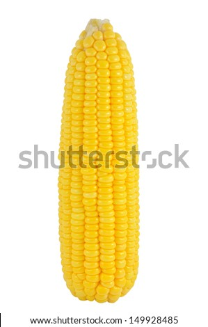 single corn on white background