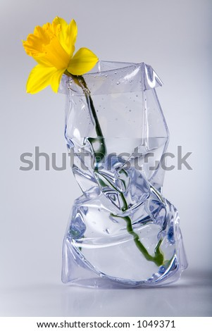 Single daffodil flower in the modern vase with water. - stock photo