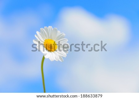Single daisy against bright blue sky with clouds, selective focus, first third composition