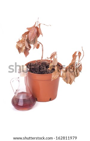 Single dead plants and dusty decanter isolated on white background - stock photo