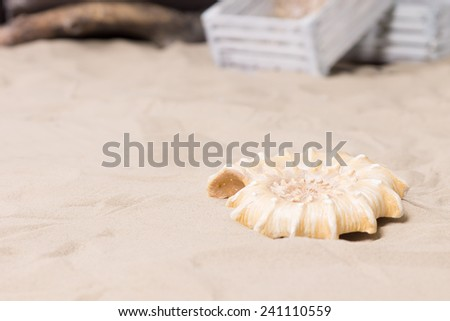 Single decorative spiral sea shell lying on beach sand in a marine or nautical themed display or exhibit with copyspace with old white wooden crates in the background - stock photo