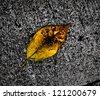 single dry leaf on cement floor - stock photo