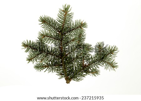 single evergreen branch from a fir tree - stock photo
