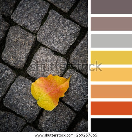 Single fallen leaf, in autumn colours, over dark cobblestone background. In a colour palette with complimentary colour swatches. - stock photo