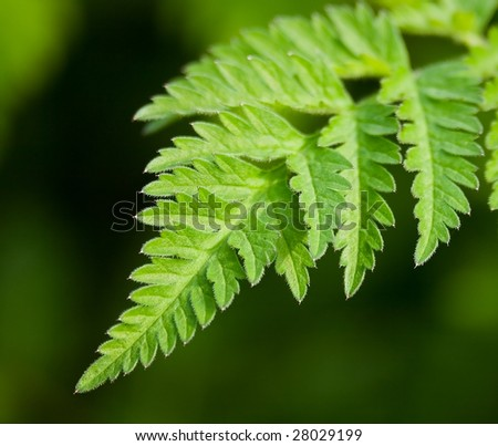 Single fern frond growing in the forest