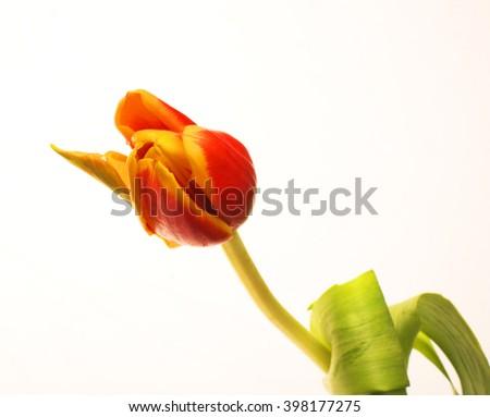 Single flower. Beautiful artistic background. - stock photo