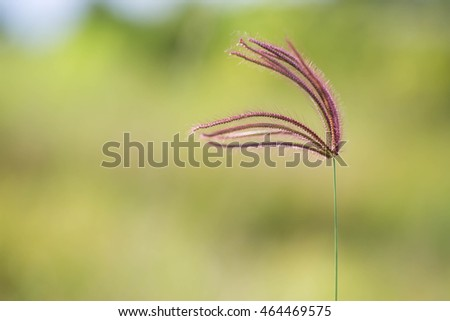 single flower grass in the wind blurred background