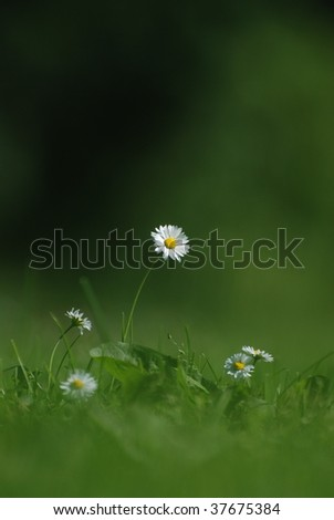 Single flower in a sea of grass - stock photo