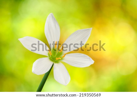 single flower on a yellow background closeup - stock photo