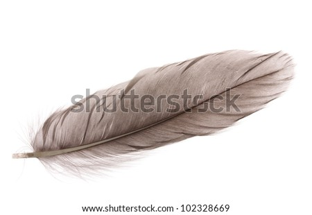Single fluffy feather isolated on white