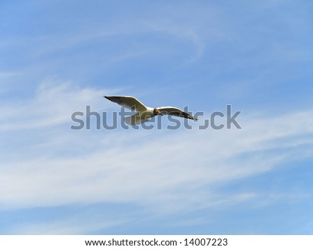 Single flying seagull against the blue sky - stock photo