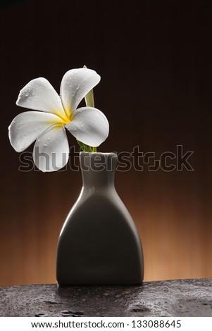 single frangipani in the vase - stock photo