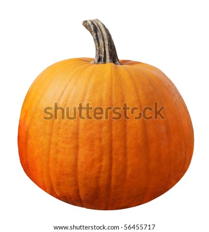 Single fresh pumpkin isolated on white background - stock photo