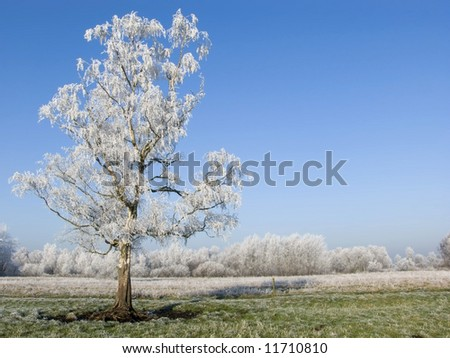 Single frozen tree - stock photo