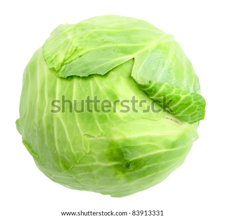Single green cabbage with dew. Close-up. Isolated on white background. Studio photography.