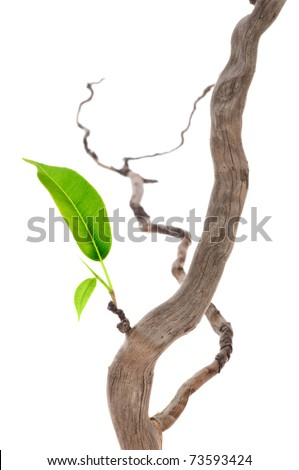 Single green leaf on dry branch - stock photo