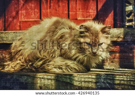 Single homeless cat. Photos in a grunge style. - stock photo