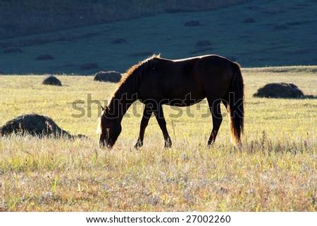 single horse - stock photo